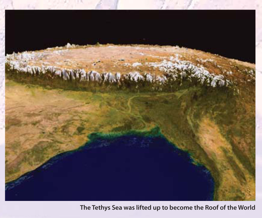 The Tethys Sea was lifted up to become the roof of the world.