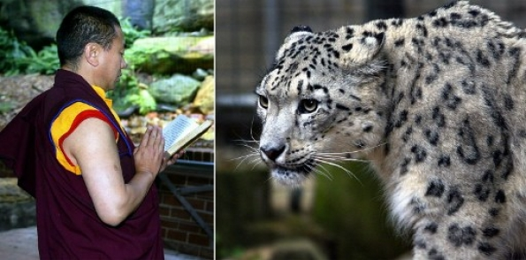 snow_leopard_buddhis_monk_000_hkg2004040751868